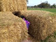 Kammesheide hay maze